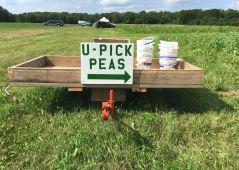 u-pick-peas