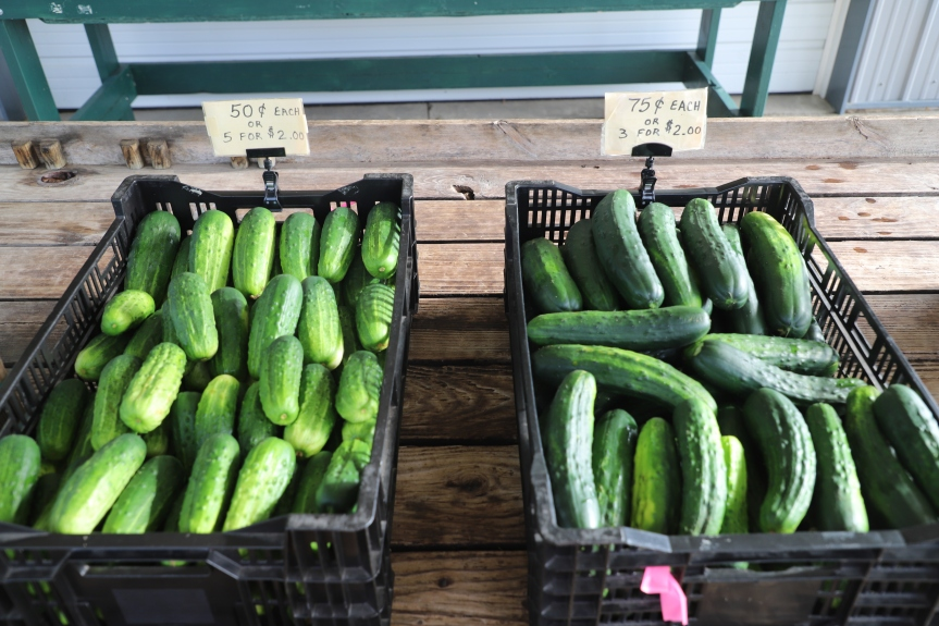 Cucumbers and Zucchini For Sale!