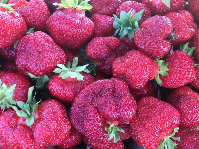 LAST DAY FOR STRAWBERRIES (SATURDAY, JULY 13TH)