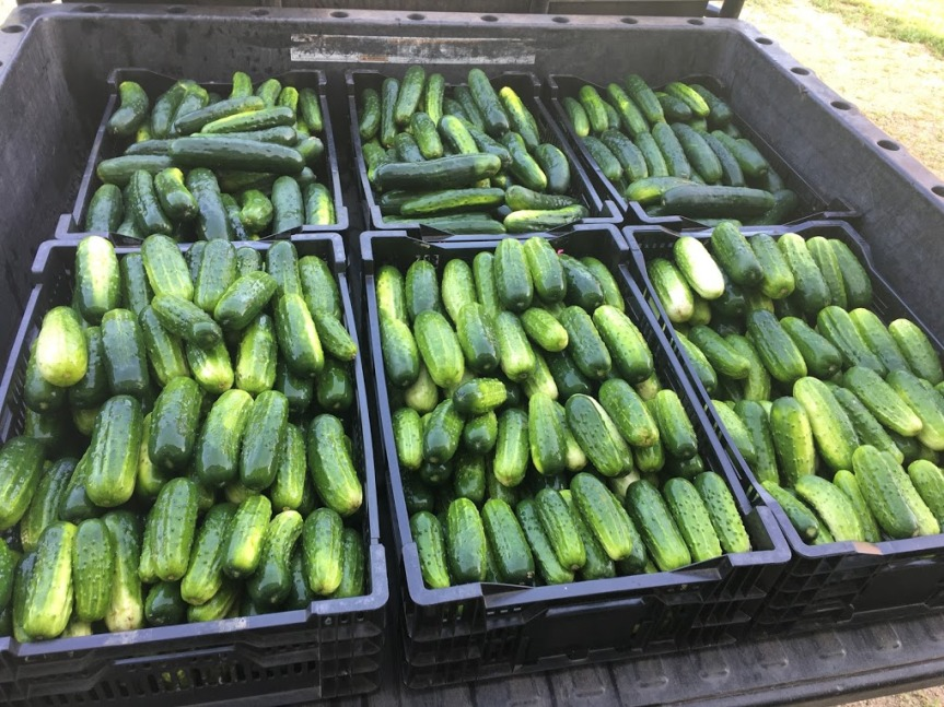 Produce Update July 24, 2019