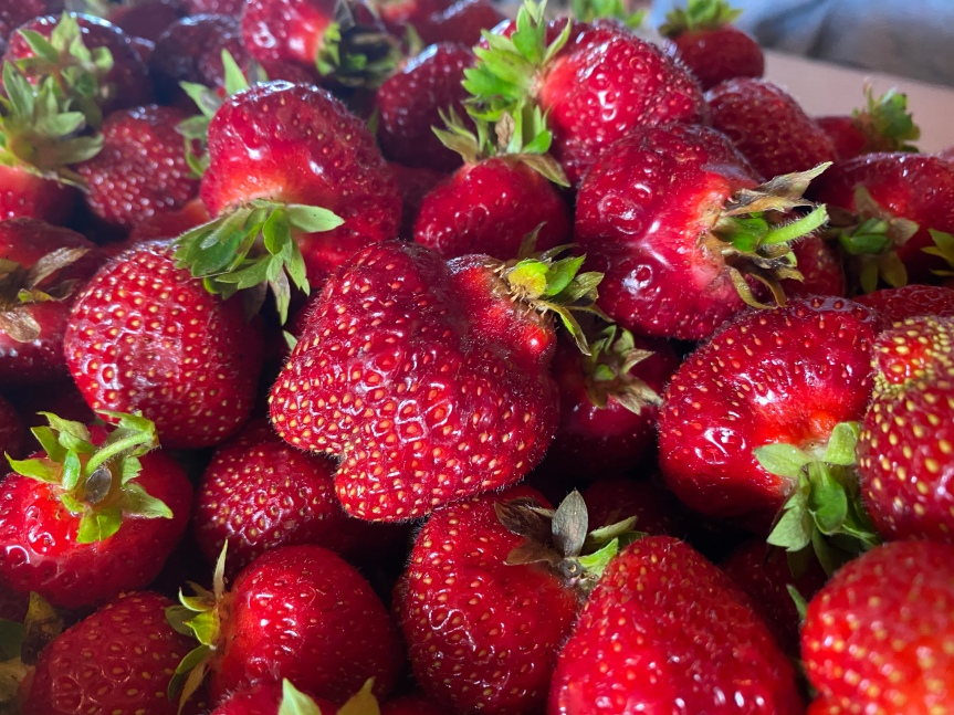 Strawberry Update June 19, 2020