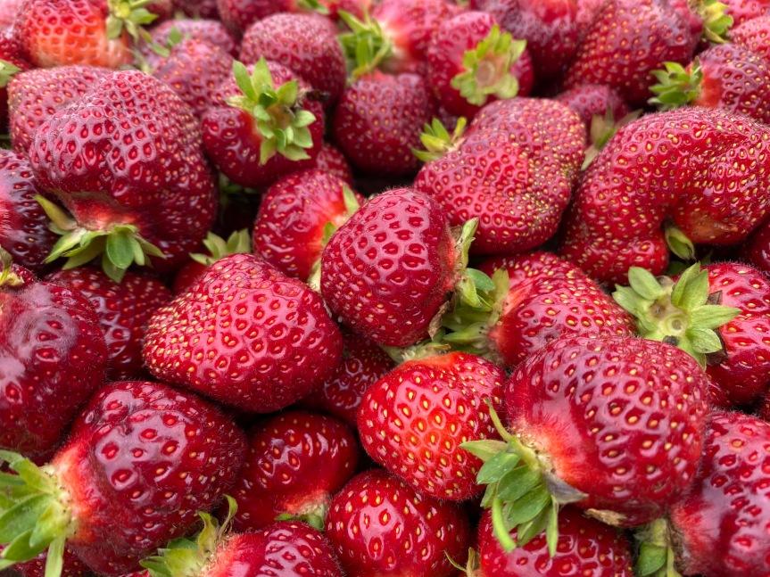 2021 Strawberry Season GeneralInformation