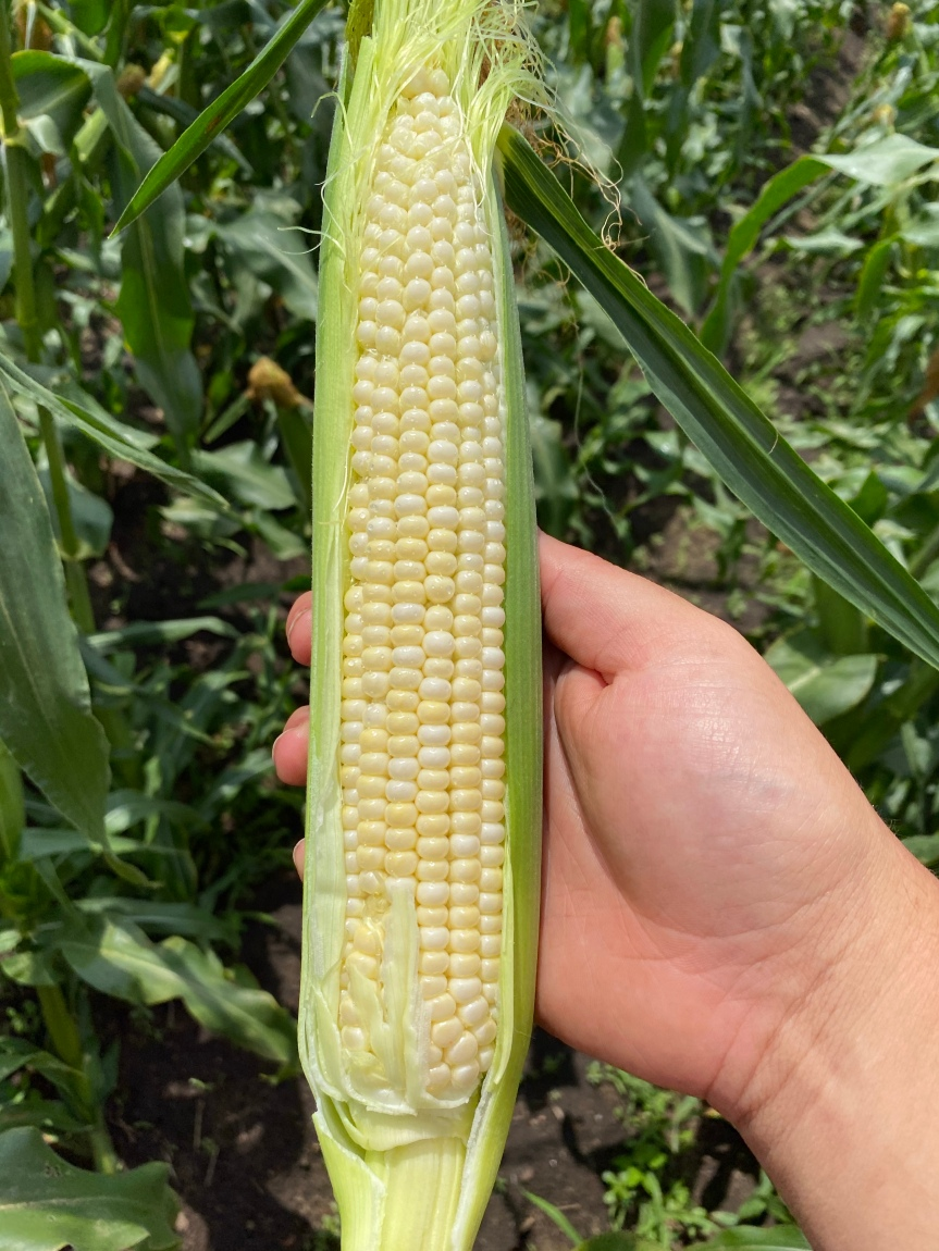 Produce Update July 14, 2020