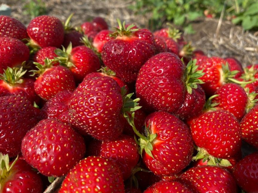 Strawberry Update June 15,2021