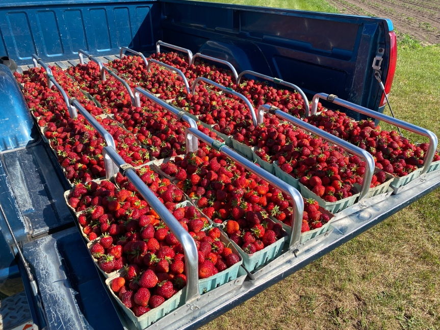 (Update Sold Out) Extra Pre-Picked Strawberries, Saturday June12th