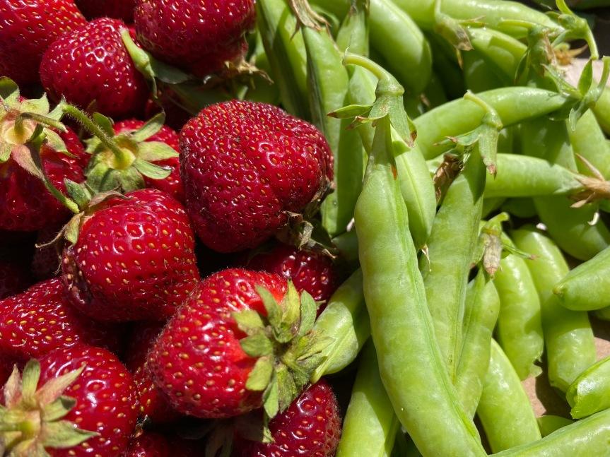 Strawberry Update June 18,2021
