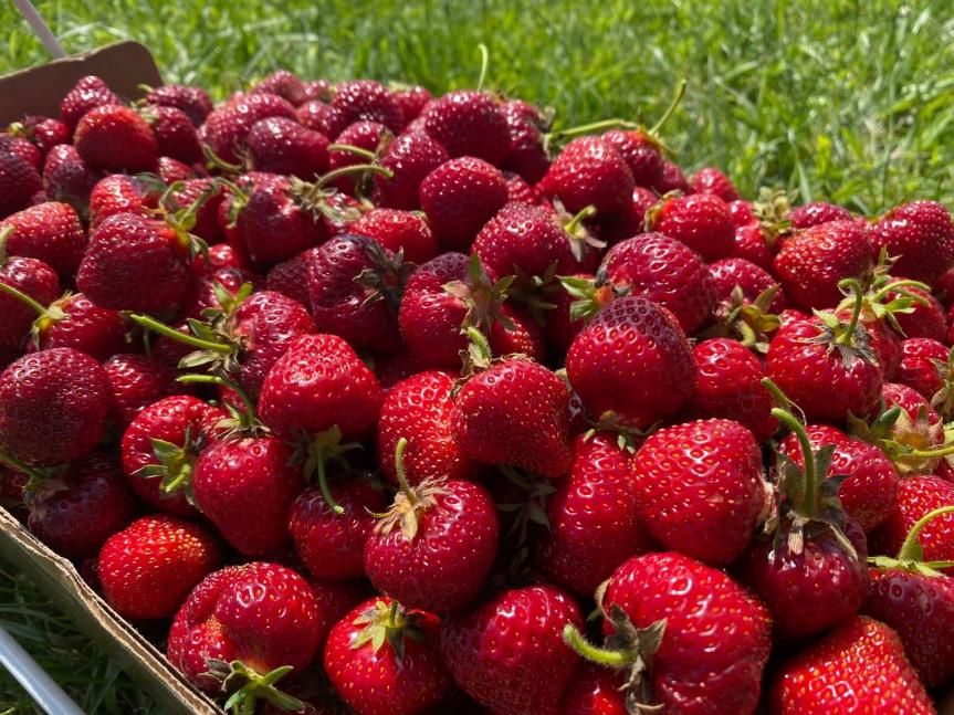 Strawberry Update June 22,2021